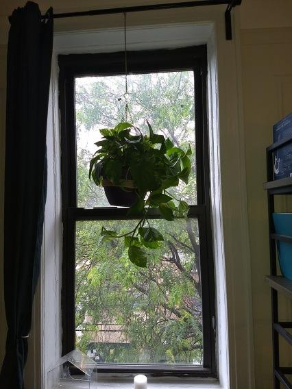 Plant 3